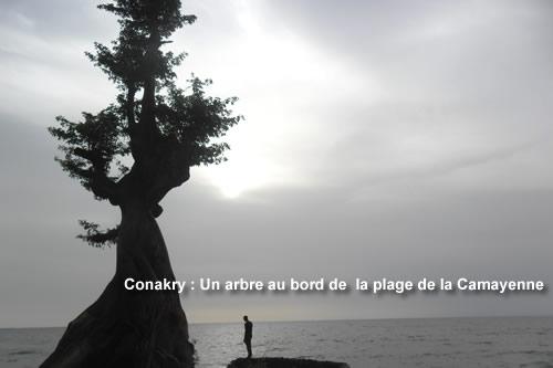 plage-camayenne